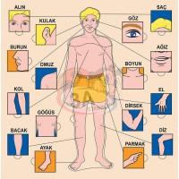 Vücudumuz Puzzle