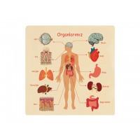 Ahşap Puzzle Organlarımız 30x30